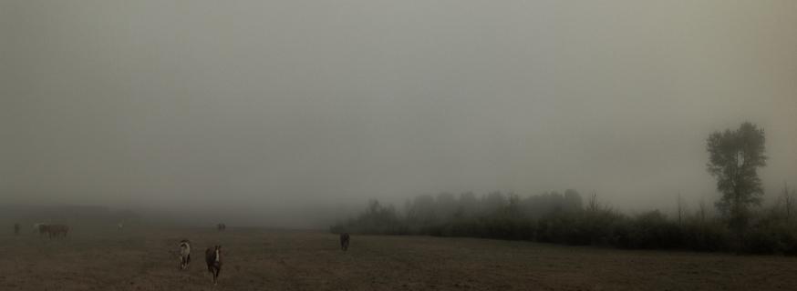 Meadow Morning CLU 3